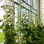 greening systems