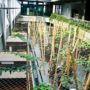 Greening systems in atrium at CSOB 2/2, Prague 5 – Radlice